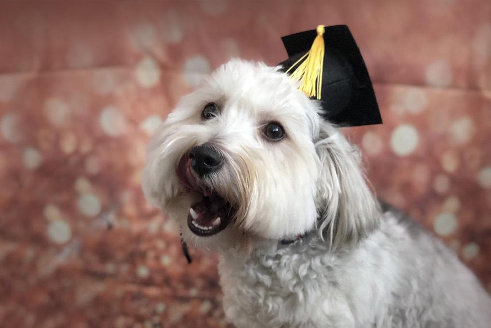 puppy university